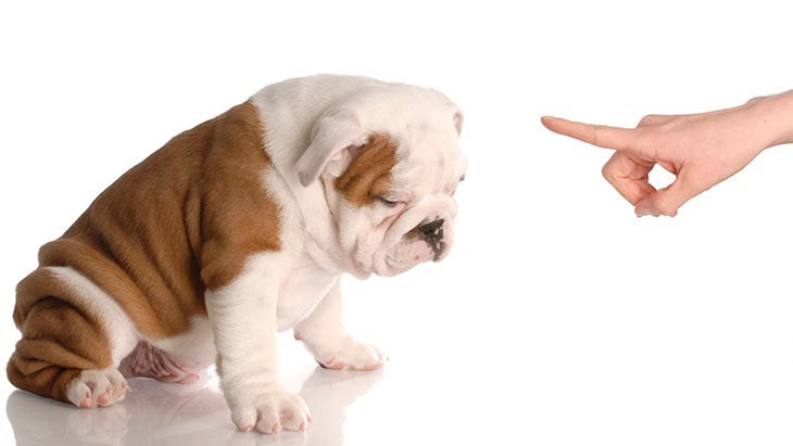 Vidéo : Et si vous deviez manager un chien ?